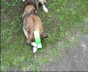 hundKlebeband