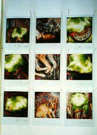 polaroids14