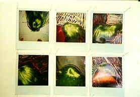polaroids15